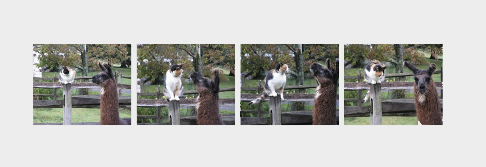 lama-and-cat-slider