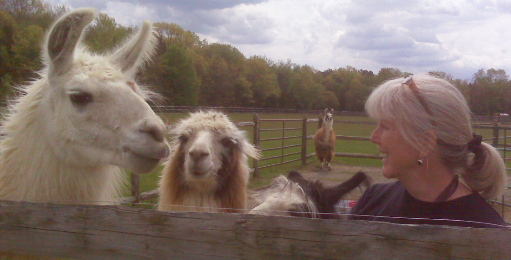 Here I am with our four llama boys: SLLL Señor Eduardo, BHLF Extra Extra Read All About It (aka Jim-E), BHLF Carbon Footprint, and SLLL Clemente in background. Hello from your new Lama Letter editor!