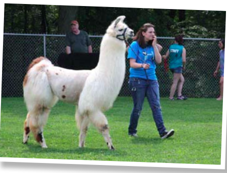 The llama area is roped off, and students are able to interact personally with the llamas, with members of PLAA on hand for direction. Breckin enjoyed the sunny afternoon as much as the students!